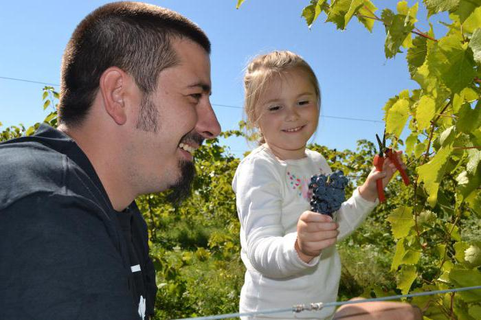 grapes for Moscow region varieties uncovered care