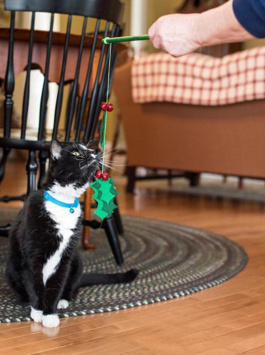 Как сделать игрушки для котёнка своими руками дома 89