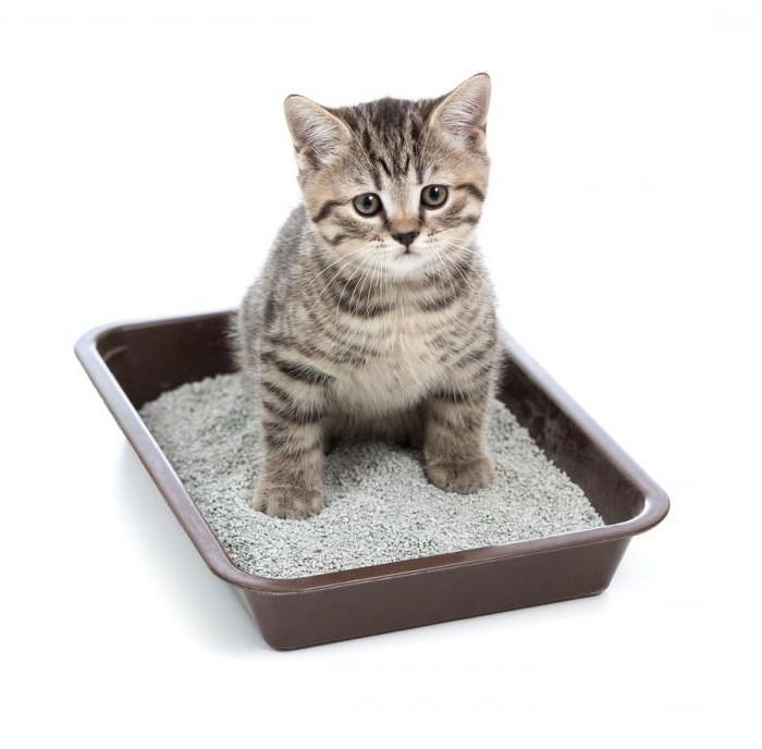 Кот не ходит по большому в унитаз