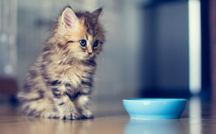 Когда котенку делать первые прививки и какие цена - 184