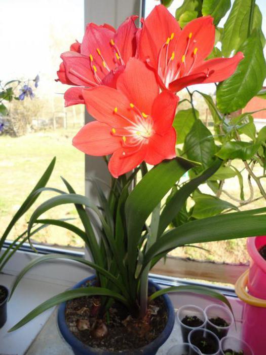 10 домашних комнатных цветков