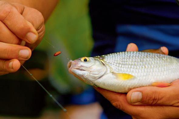 когда клюет рыба осенью