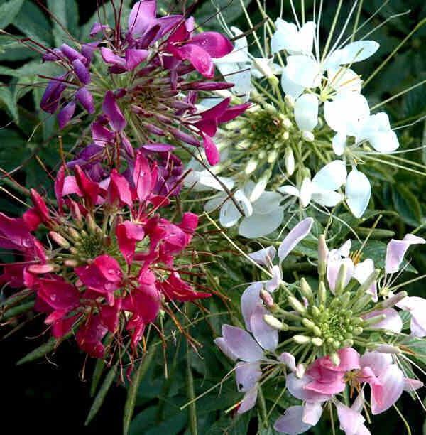 брызги шампанского фото цветок