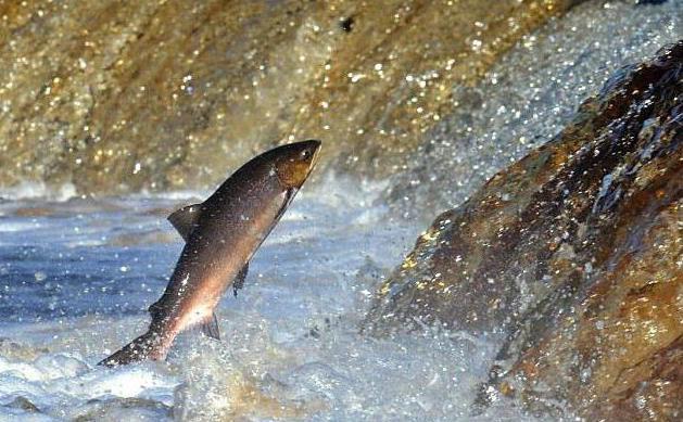 добавки прикормка рыбы