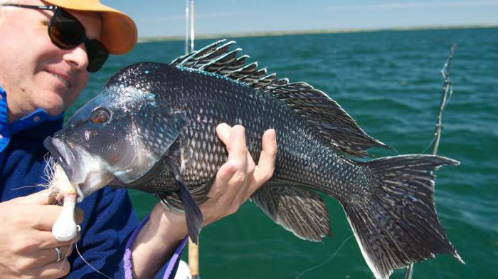 Рыбалка на Черном море с берега спиннингом, на блесну. Снасти ...