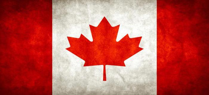 Клен канадский: как выглядит и как посадить на дачном участке