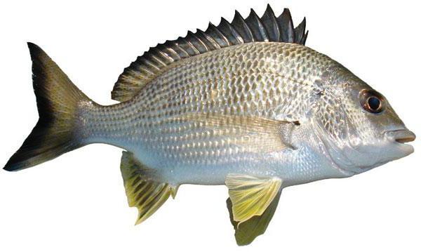 когда клюет рыба лещ