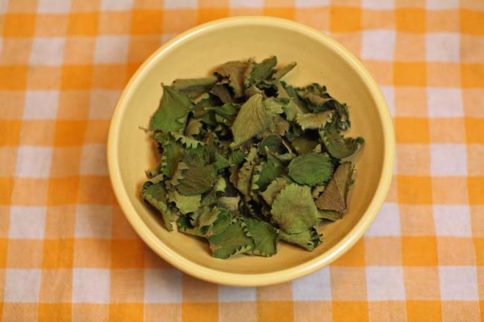 листья земляники лечебные свойства и противопоказания фото