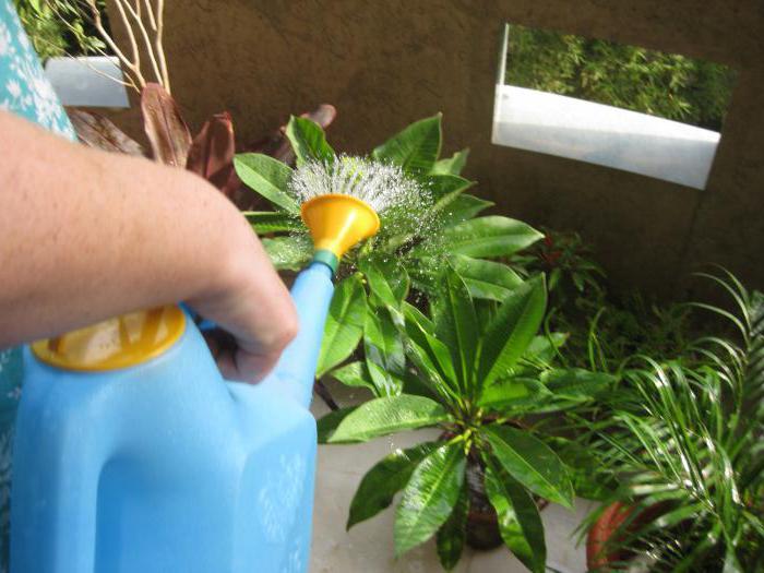 Среди многообразия препаратов для Среди многообразия препаратов для подкормки комнатных растений стоит выделить удобрение Агрикола.