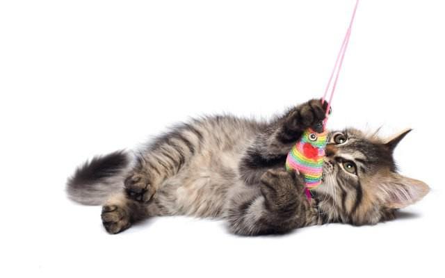 Как сделать место для котенка