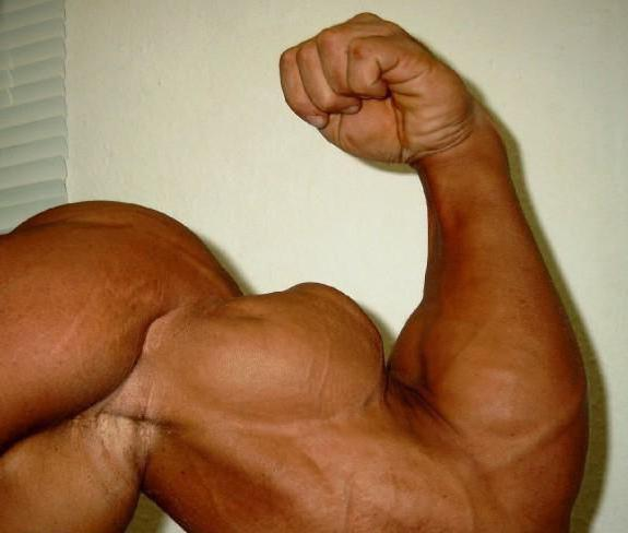 shoulder biceps tendon