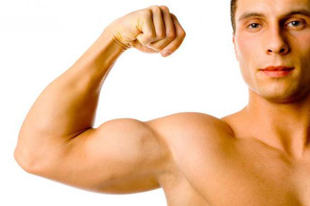 biceps muscle function