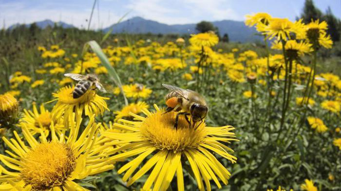 how much does a working bee live