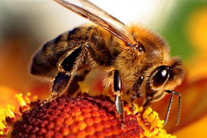 how much does a bee live