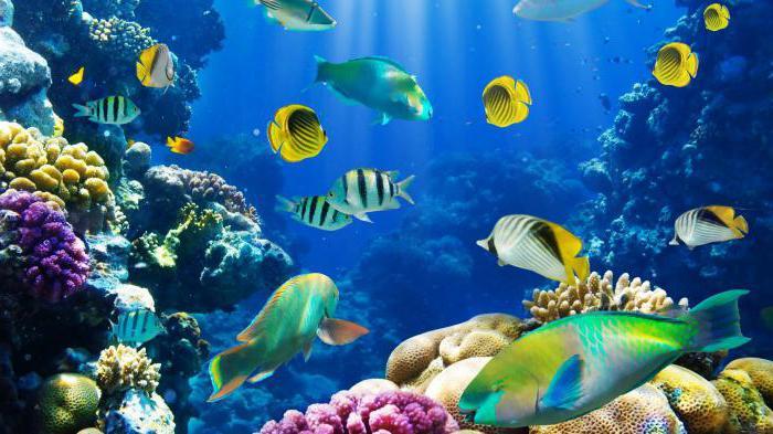 как сделать морскую воду дома