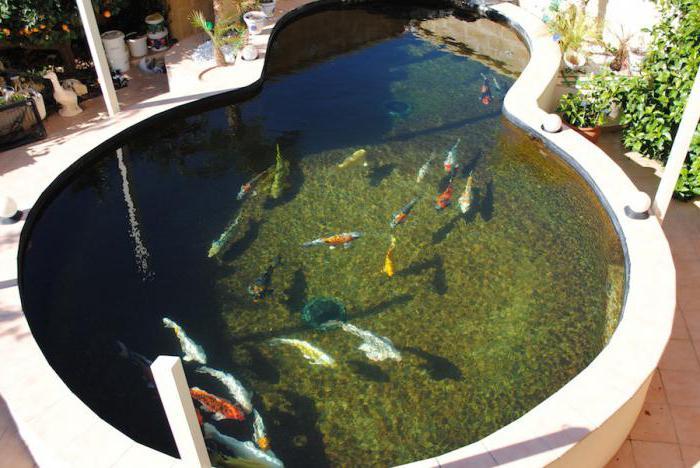 Фильтр для пруда с рыбами своими руками