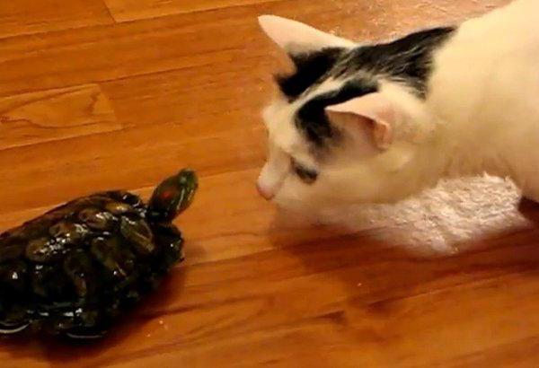 чем можно кормить черепаху в домашних условиях