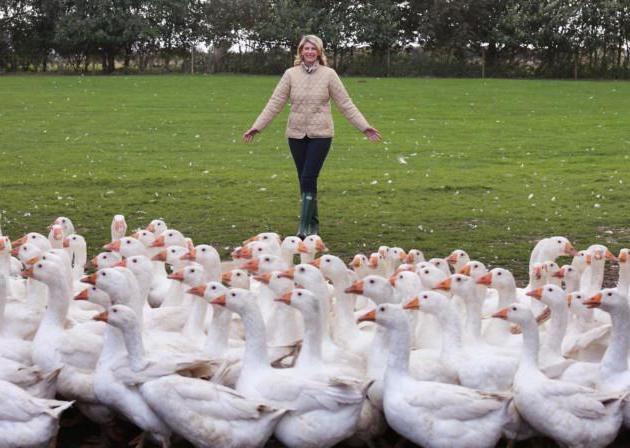 what to feed the geese for meat