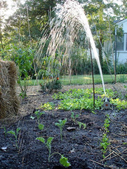 Капуста кале: полезные свойства и рецепты приготовления