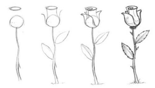 Как рисовать цветы карандашом поэтапно для начинающих