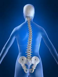 Что находится в правом боку у человека со спины