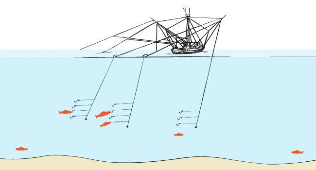 рыбалка на судака троллингом