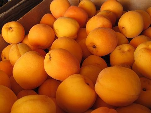 the benefits and harm of apricots