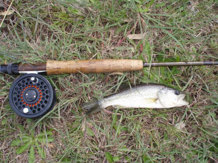 how to collect fly fishing gear