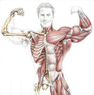 Анатомия Силовых Упражнений Фредерика Делавье