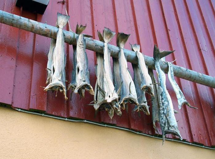 Как сушить рыбу в домашних условиях летом без мух 44