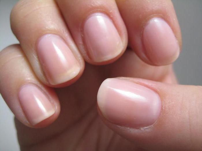 Строения ногтя и ногтевой пластины