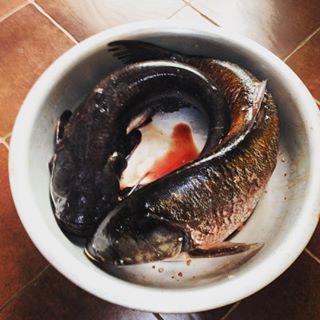 рыбалка на Пахре на фидер