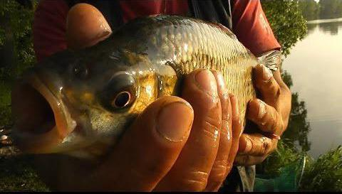 платная рыбалка на Пахре