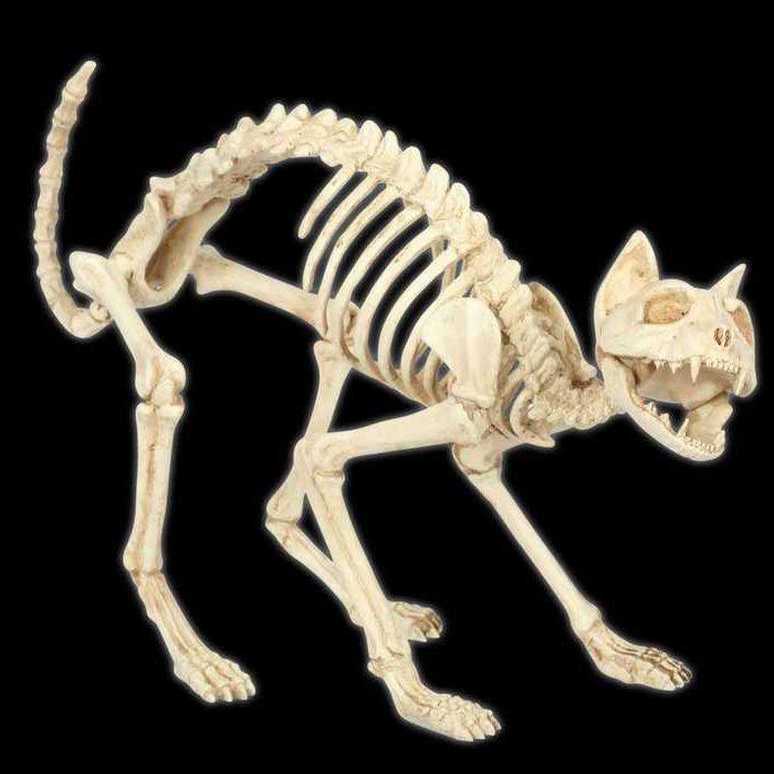 анатомия скелета кошки
