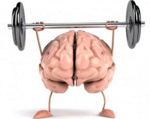 возрастные особенности среднего мозга