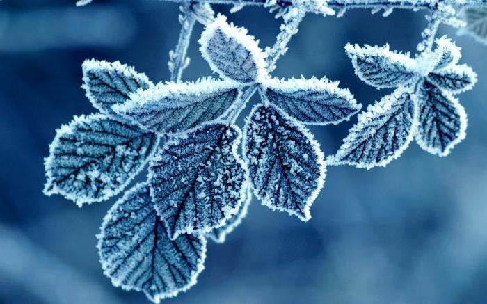 how frost physics is formed