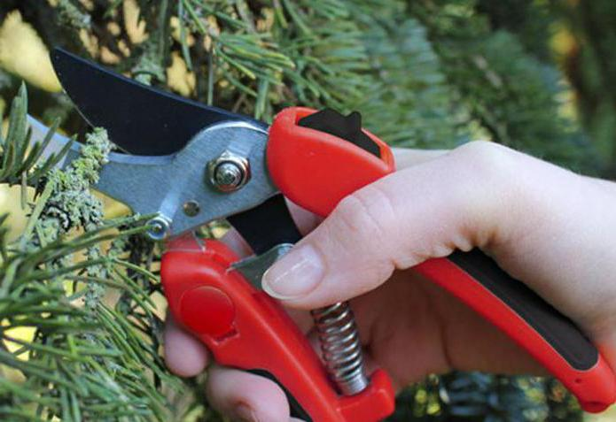 how to choose a garden pruner correctly