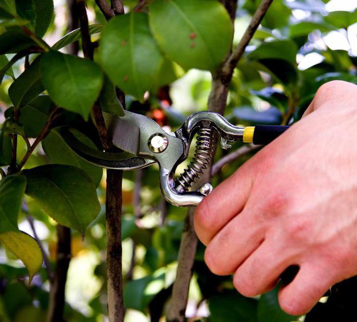 how to choose a garden pruner