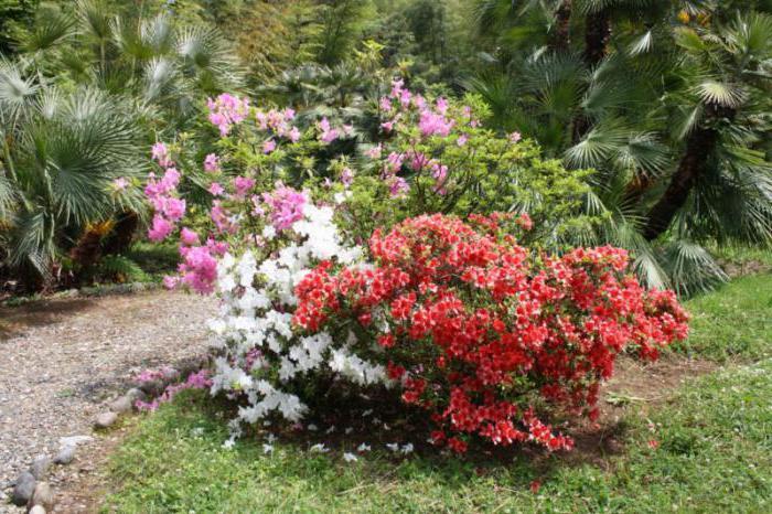 как доехать до ботанического сада в батуми мне
