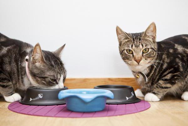 сколько раз в день кормить кота