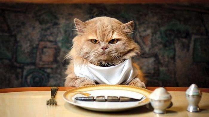 сколько раз надо кормить кота в день