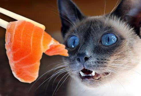 сколько раз день кормить кота сухим