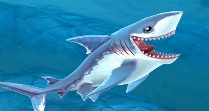 herring sharks