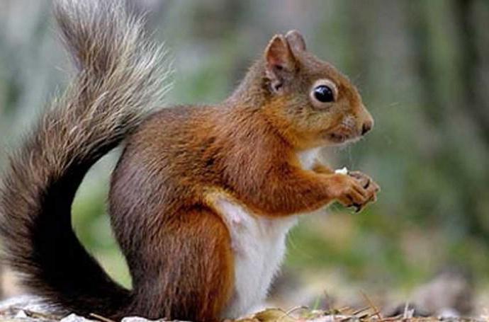 squirrel in a wheel