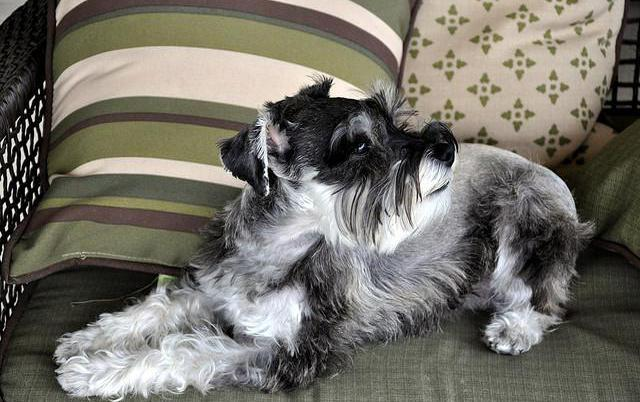 which dog is better to have in a one-room apartment