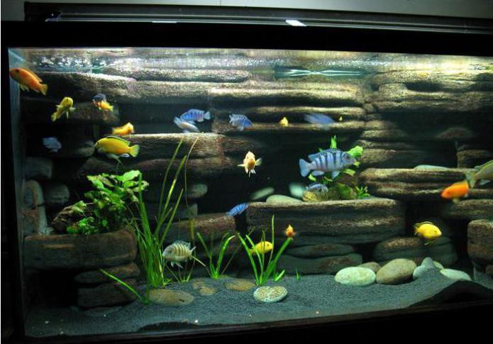 Как сделать своими руками декорацию в аквариум 87
