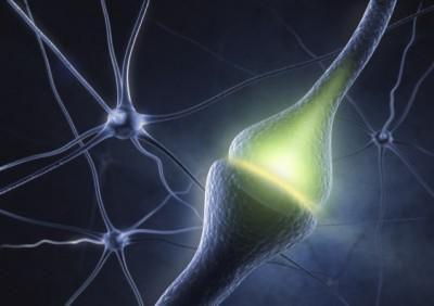 dendrite neuron