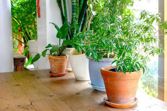 как ухаживать за растениями комнатными