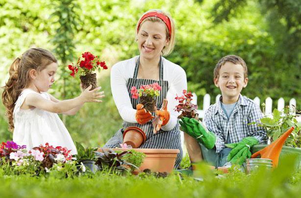 как ухаживать за комнатными растениями детям