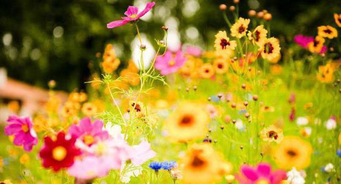 картинки на рабочий стол летние цветы красивые № 260290 бесплатно